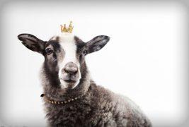 女性への接し方~動物占いタイプ別~「羊」編